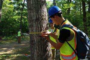 tree measuring image