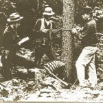 Man on right is measuring diameter of tree with a caliper, while the man in the center is extracting a core from a hollow auger to measure growth rings.
