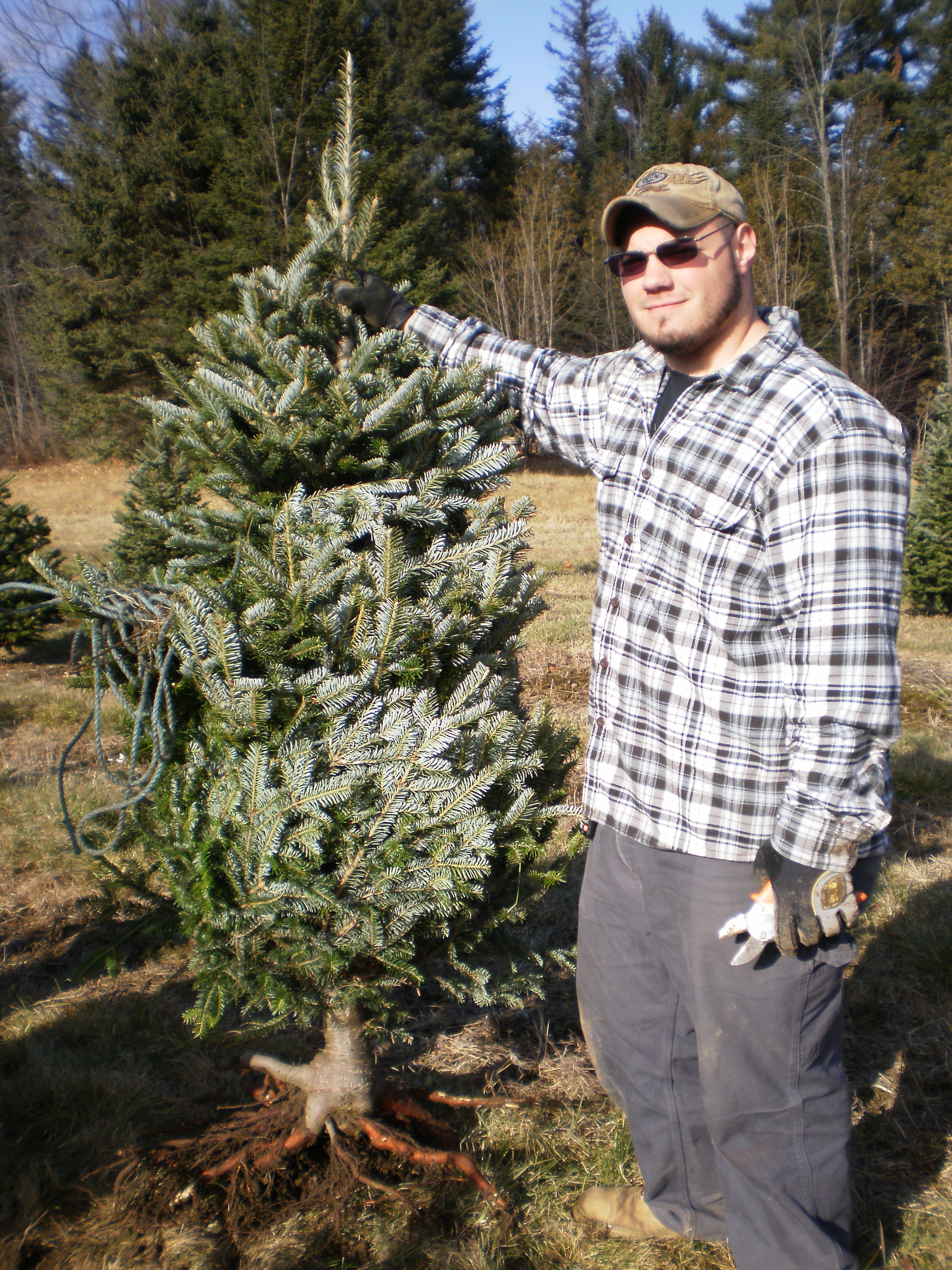 man holding a Christmas tree for sale
